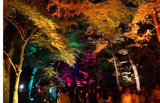 糺の森の光の祭01