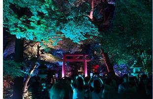 糺の森の光の祭02