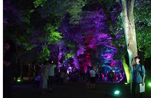 糺の森の光の祭03