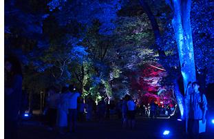 糺の森の光の祭04